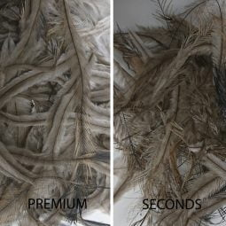 Feathers-Premium-and-Seconds